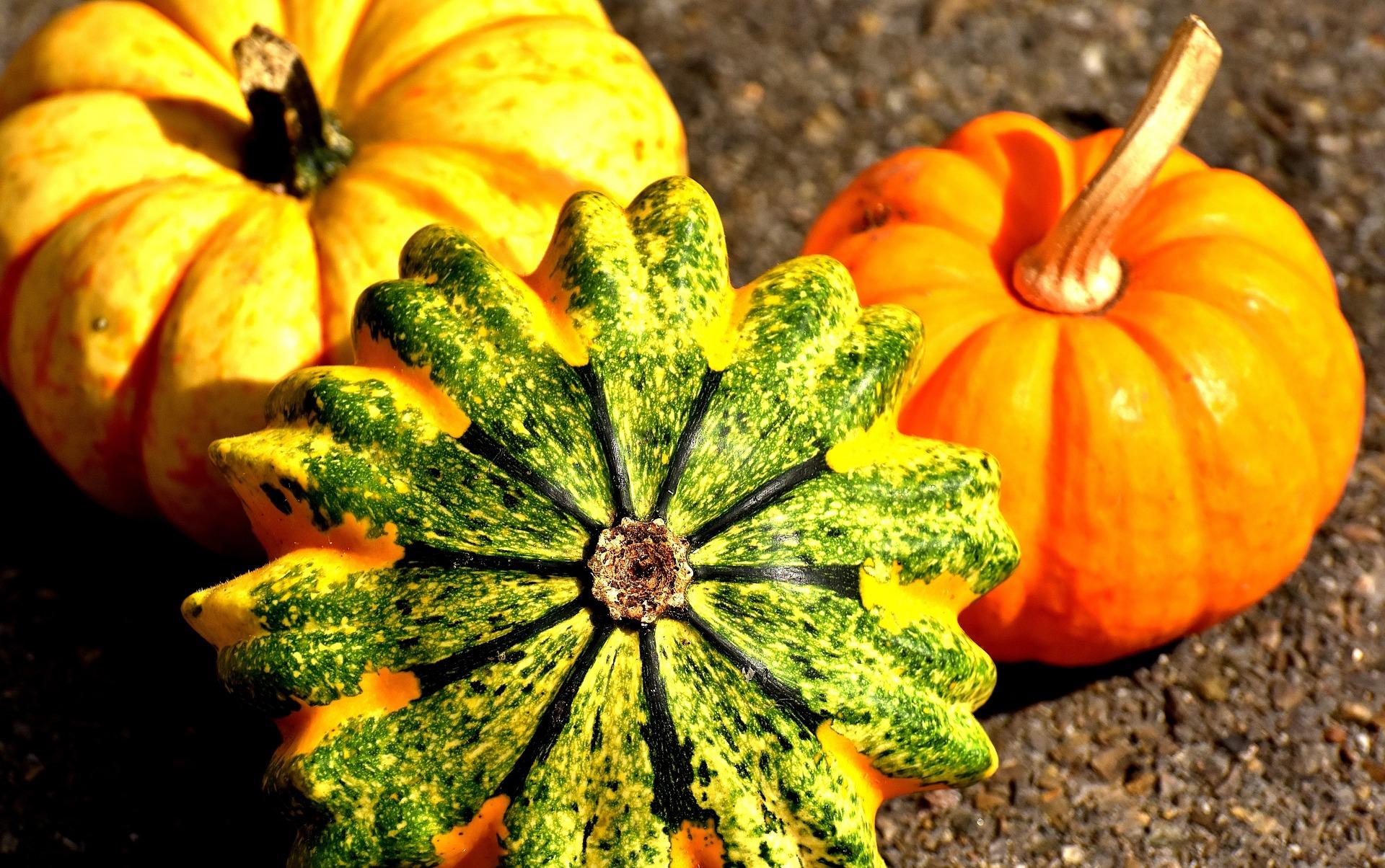 pumpkins 2204643 1920 - BLOG